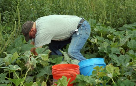 'Prime Pickins' allows community members free harvest from SCCC garden