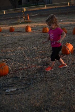Emmaleigh Rotolo pulls in her winning pumpkin at the Pumpkin Olympics, held yesterday at the agriculture building.