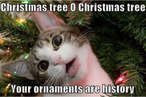 Cat memes have been here since the beginning of time. everyone knows cats love christmas trees.