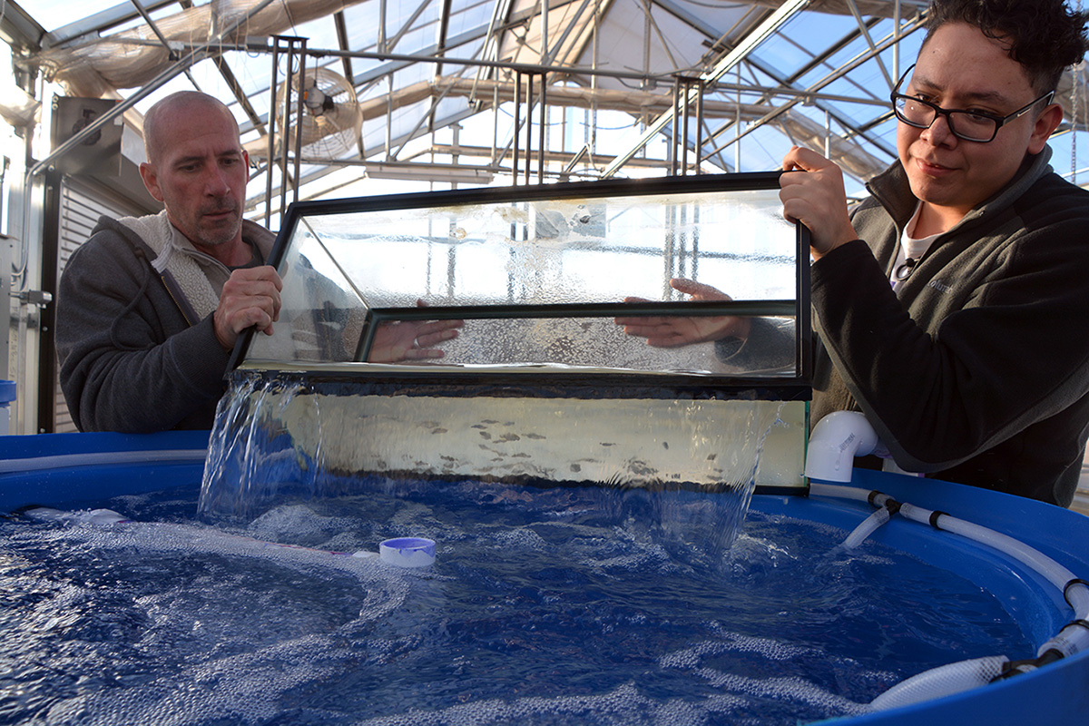 The Agriculture banquet will help fun projects such as this new fish farm for students at SCCC.