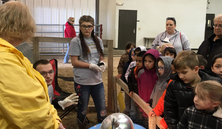 Inside the Ag building there was a station to learn all about chickens. This stations let the kids interact with adult chickens and baby chicks.