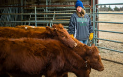 Photo Essay: Ag hosts livestock judging for area schools