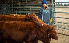 Photo Essay: Ag hosts livestock judging for area schools